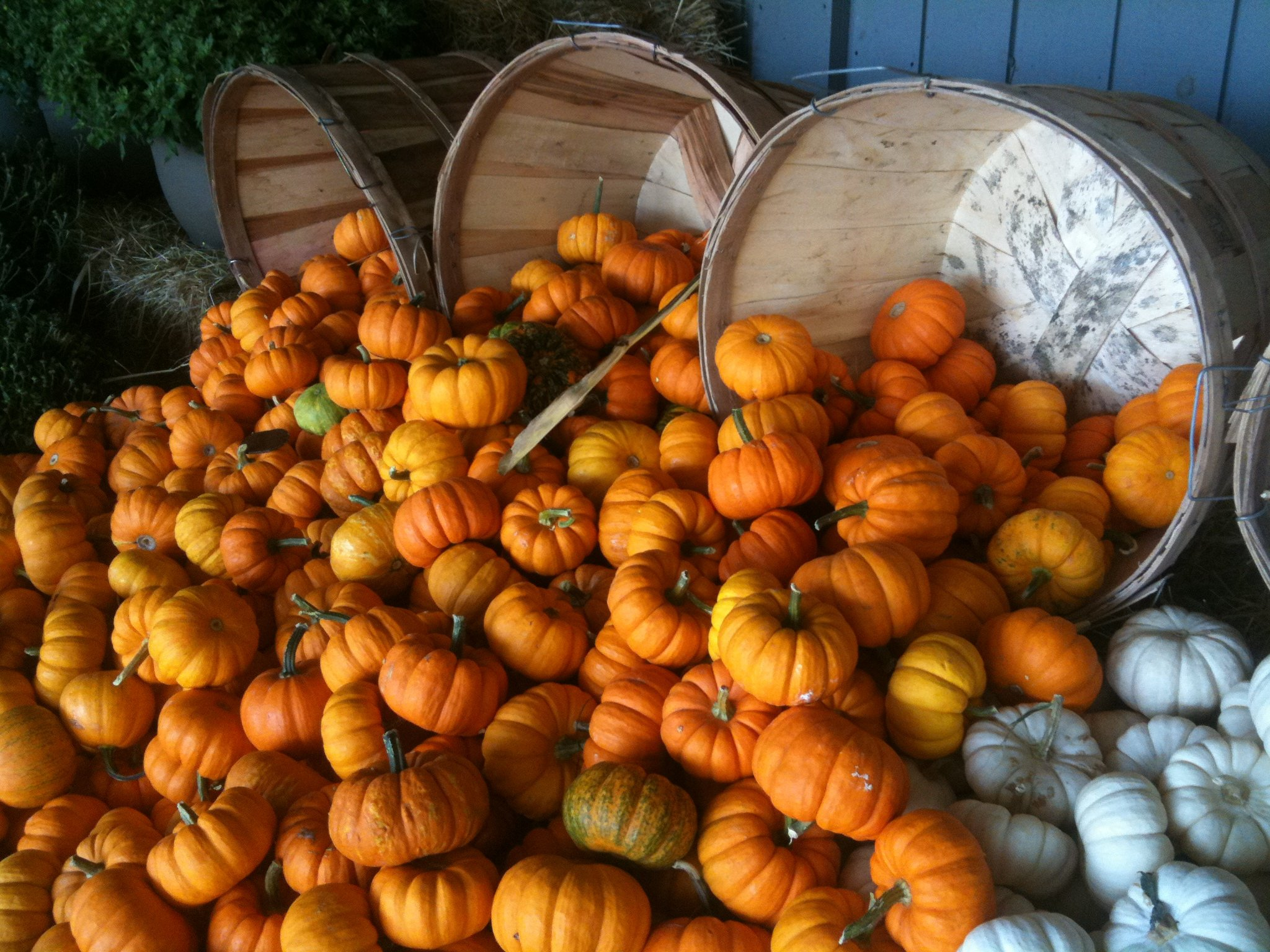 It's Pumpkin Time! Healthy Food For Late Summer